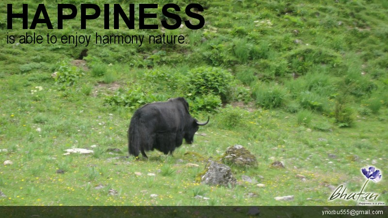 Happiness is able to enjoy harmony nature.