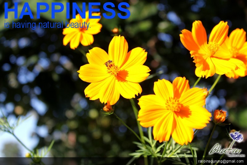 Happiness is having natural beauty.