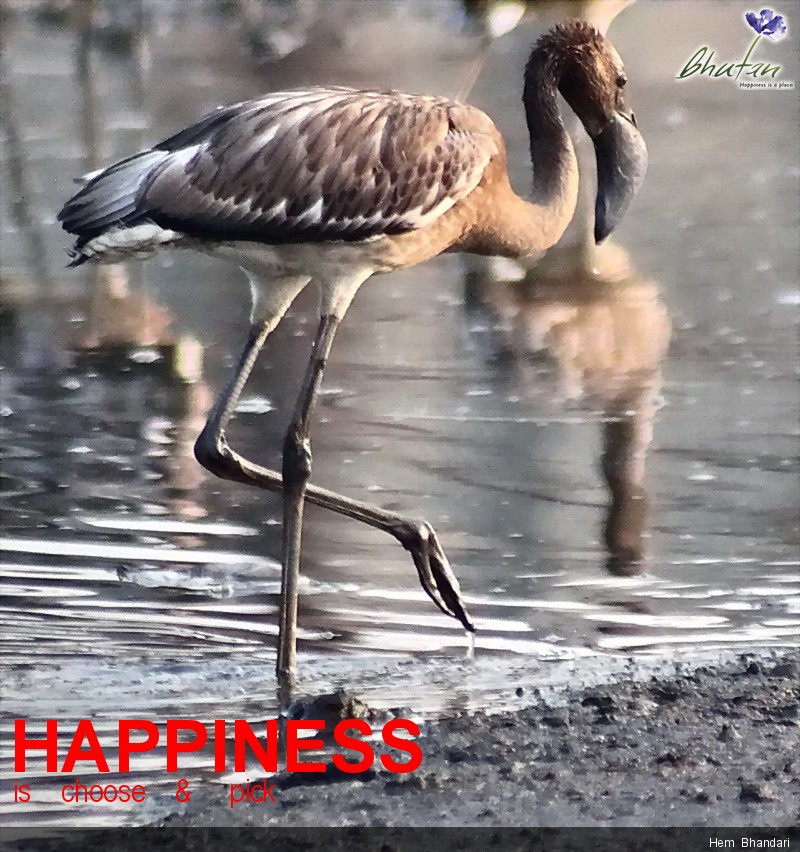 Happiness is    choose    &     pick