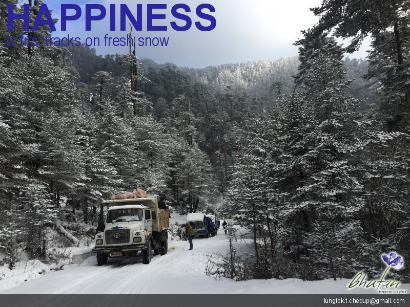Happiness is first tracks on fresh snow