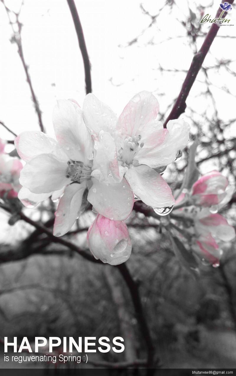 Happiness is reguvenating Spring :)