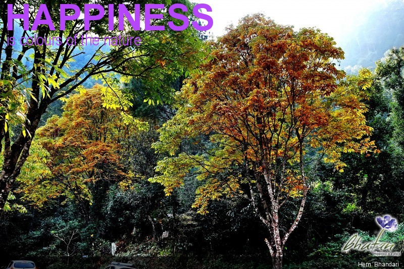 Happiness is colours of the nature