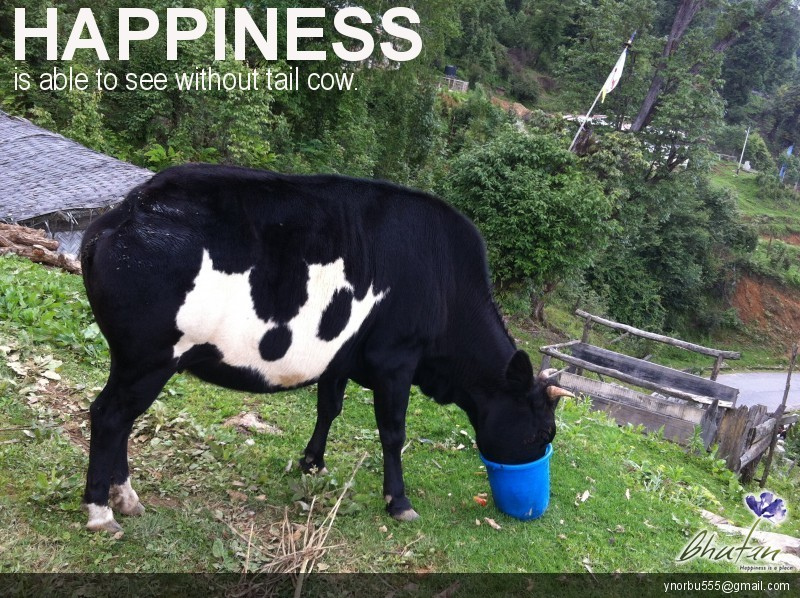 Happiness is able to see without tail cow.