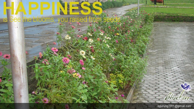Happiness is See the blooms, you raised from seeds.