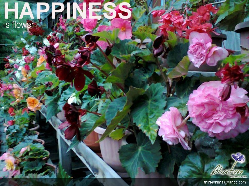 Happiness is flower