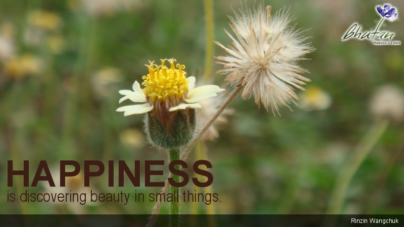 Happiness is discovering beauty in small things.
