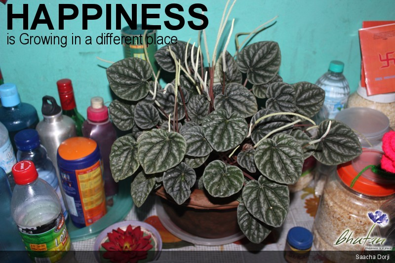 Happiness is Growing in a different place