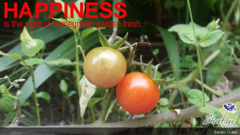 Happiness is the sight of homegrown garden fresh.