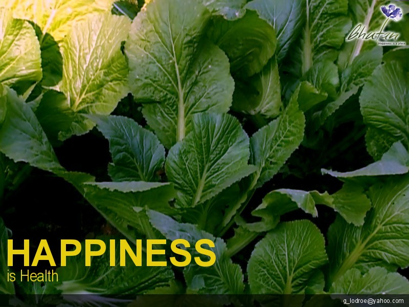 Happiness is Health