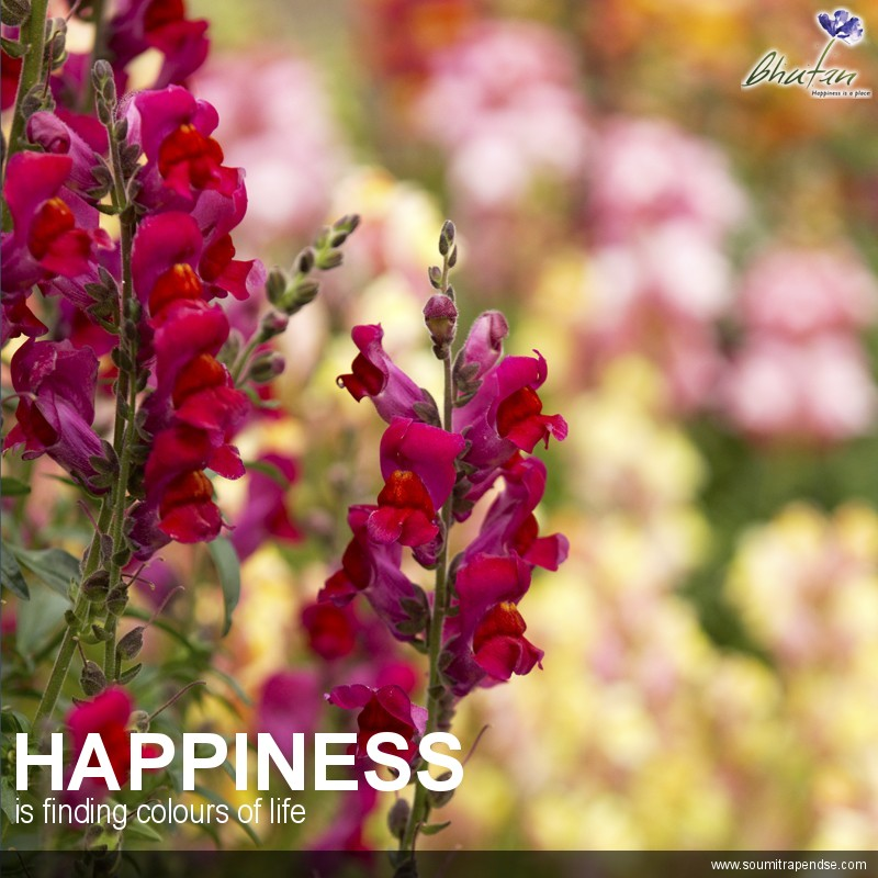 Happiness is finding colours of life