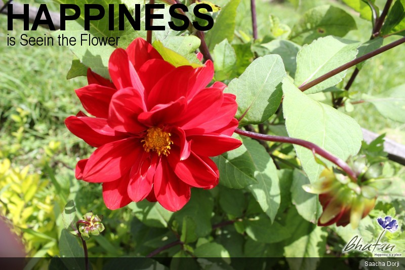 Happiness is Seein the Flower