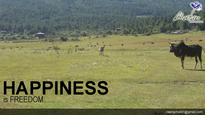Happiness is FREEDOM......