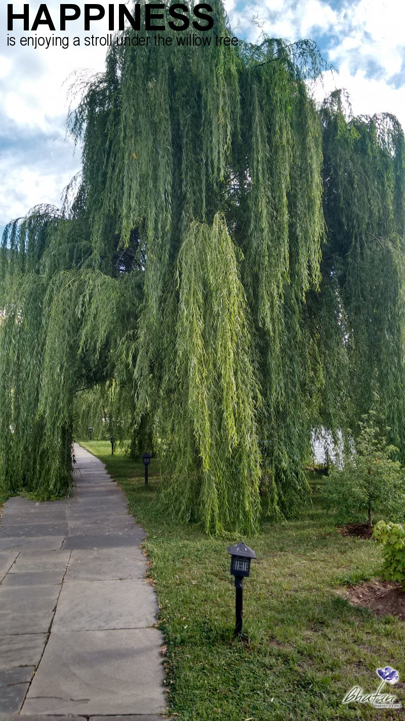 Happiness is enjoying a stroll under the willow tree.