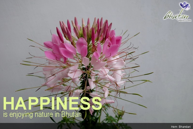 Happiness is enjoying nature in Bhutan