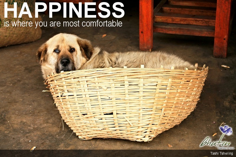 Happiness is where you are most comfortable