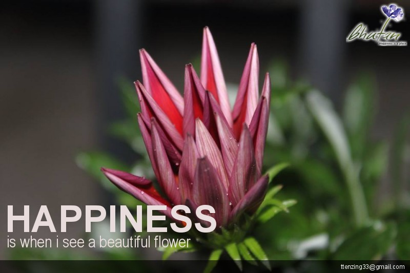Happiness is when i see a beautiful flower