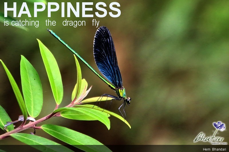 Happiness is catching   the   dragon   fly