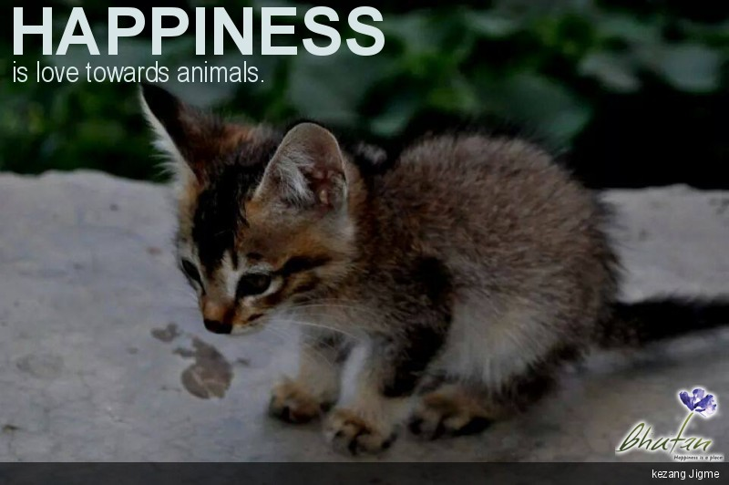 Happiness is love towards animals.