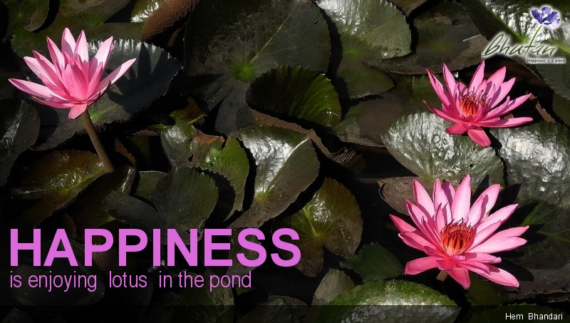 Happiness is enjoying  lotus  in the pond