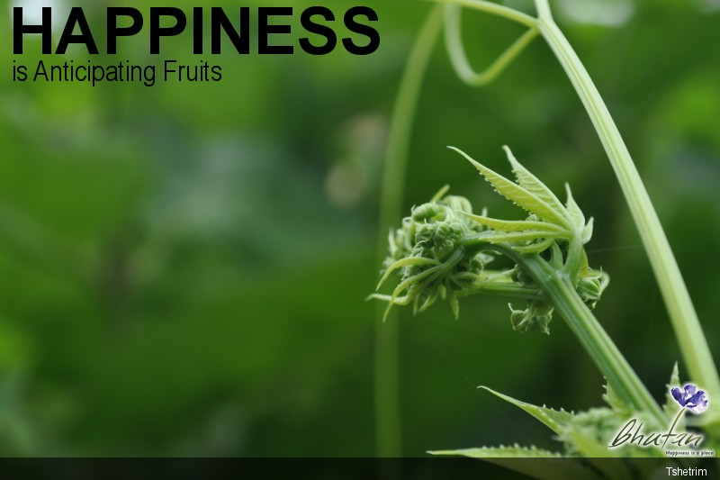 Happiness is Anticipating Fruits