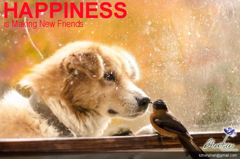 Happiness is Making New Friends