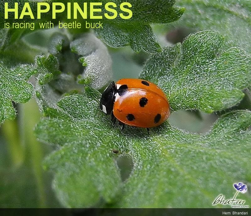 Happiness is racing  with  beetle  buck