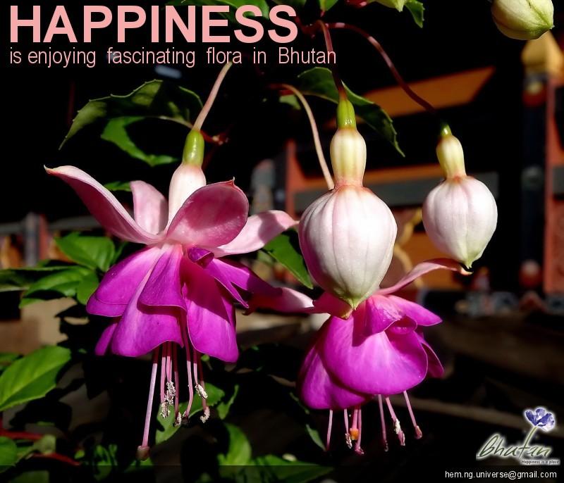Happiness is enjoying  fascinating  flora  in  Bhutan