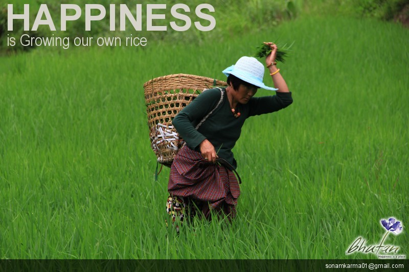 Happiness is Growing our own rice