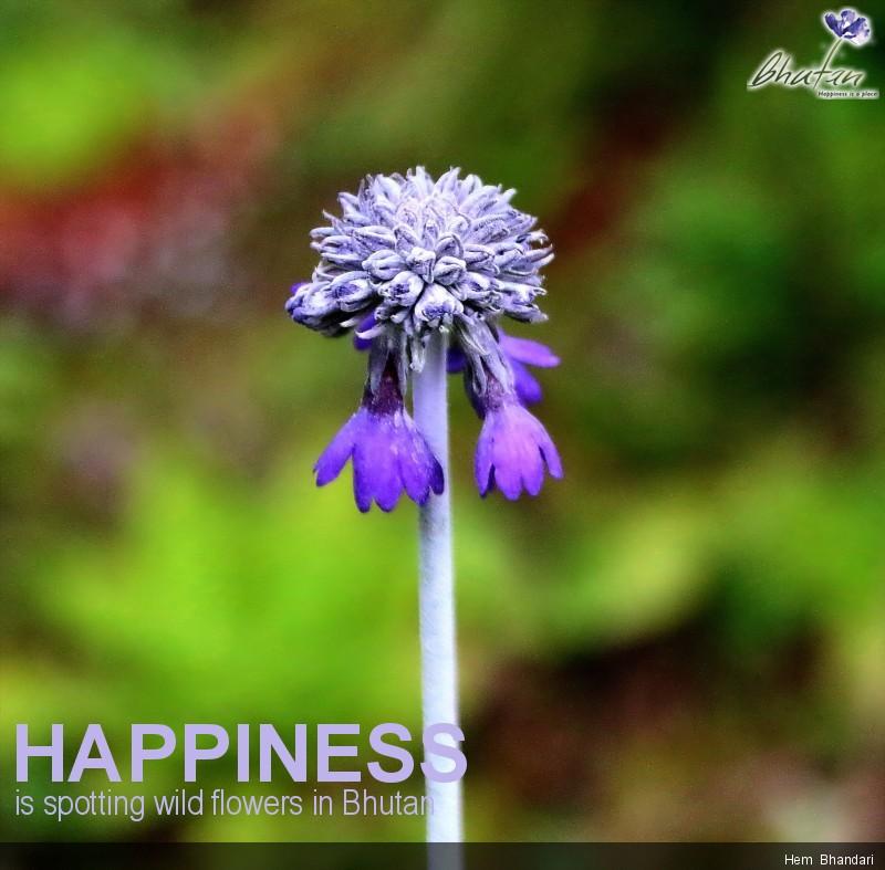 Happiness is spotting wild flowers in Bhutan