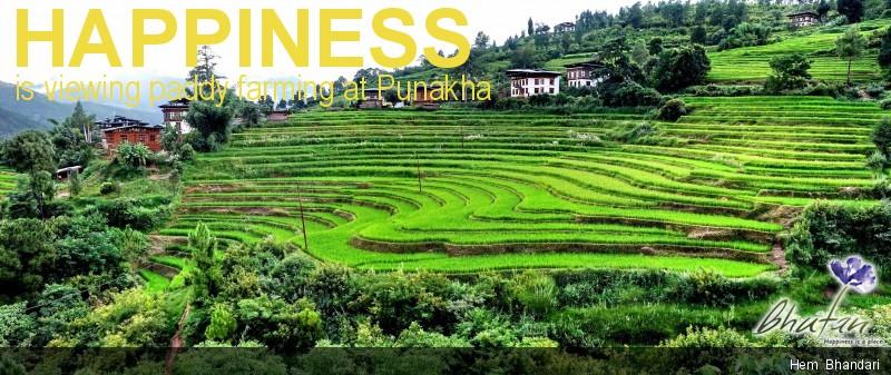 Happiness is viewing paddy farming at Punakha