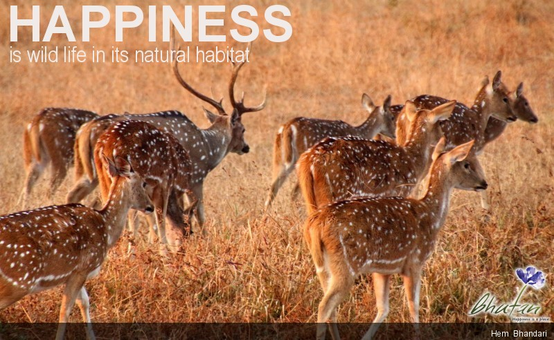 Happiness is wild life in its natural habitat