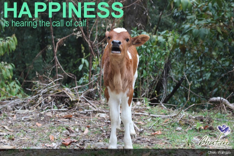 Happiness is hearing the call of calf.