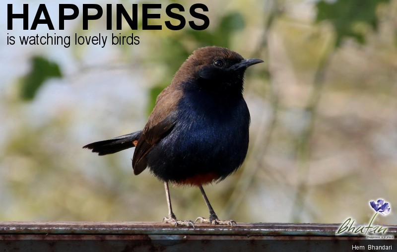 Happiness is watching lovely birds