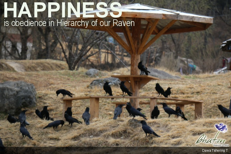 Happiness is obedience in Hierarchy of our Raven