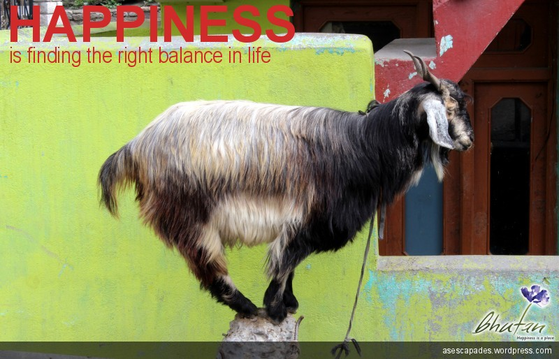 Happiness is finding the right balance in life