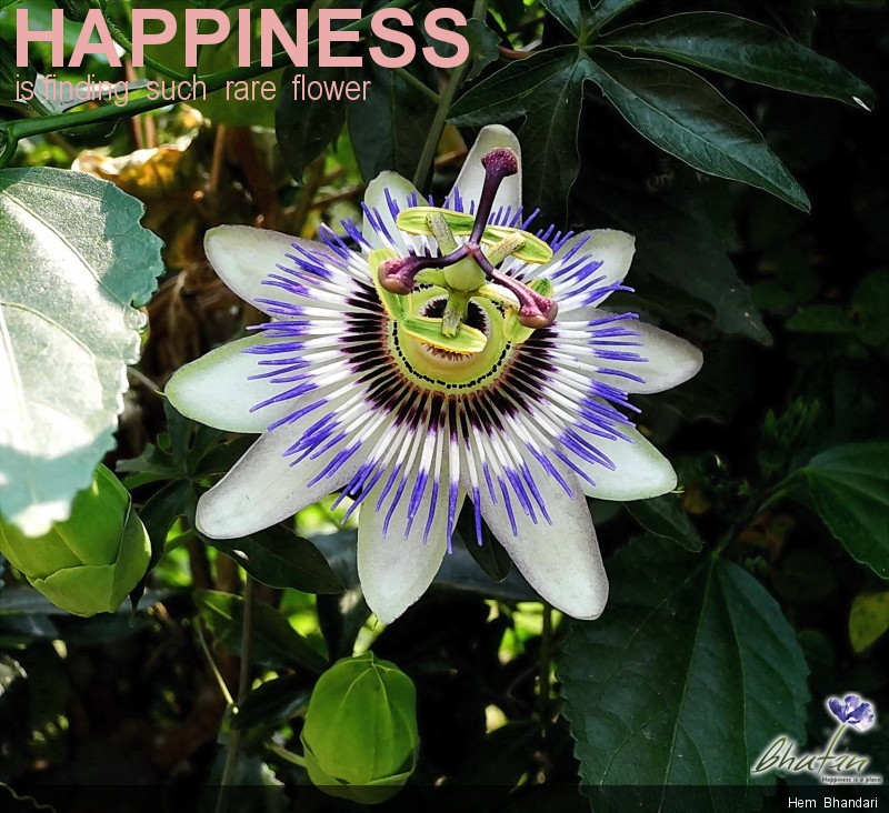 Happiness is finding  such  rare  flower