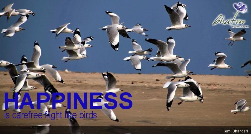 Happiness is carefree flight like birds