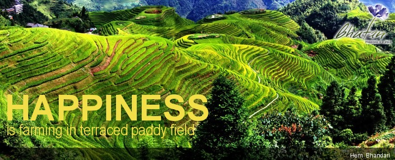 Happiness is farming in terraced paddy field