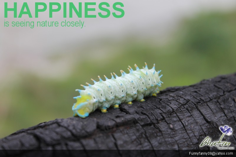 Happiness is seeing nature closely.