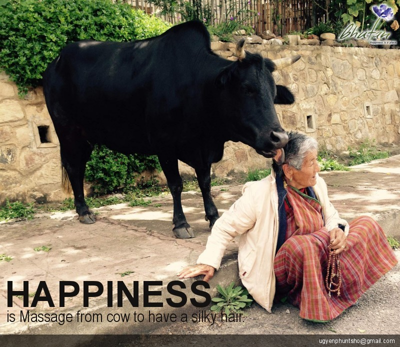 Happiness is Massage from cow to have a silky hair.