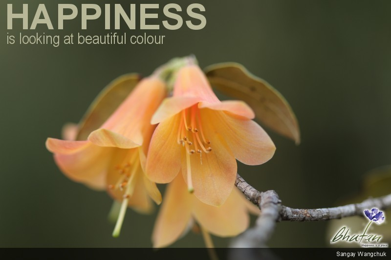 Happiness is looking at beautiful colour