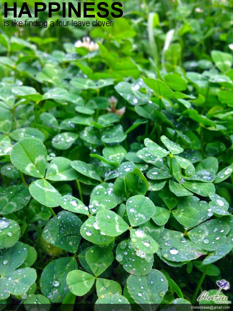 Happiness is like finding a four leave clover