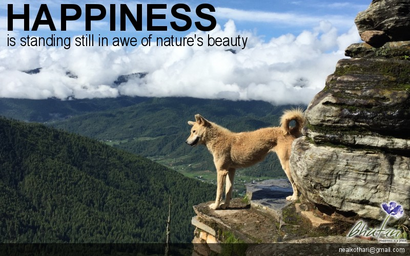 Happiness is standing still in awe of nature's beauty