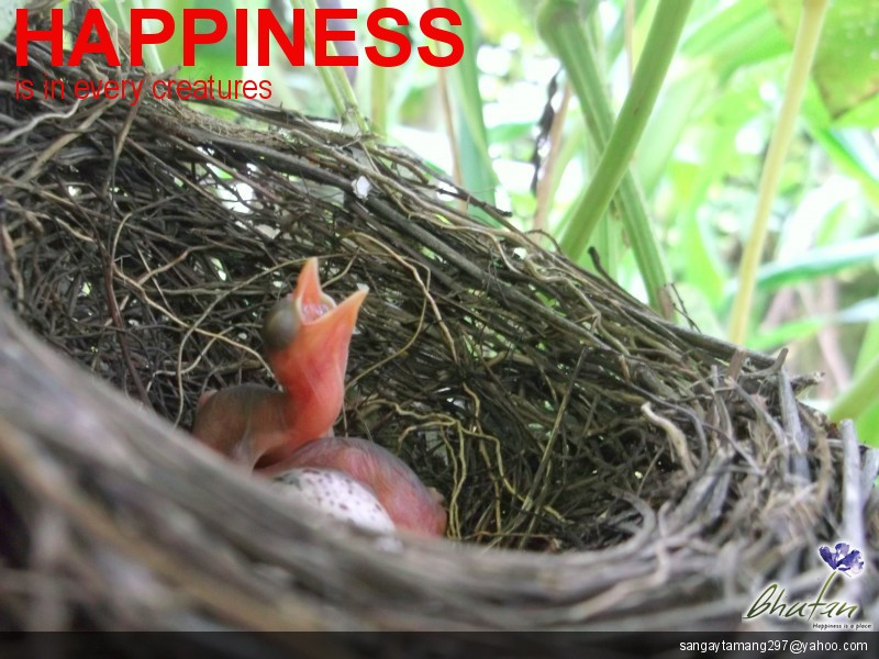 Happiness is in every creatures