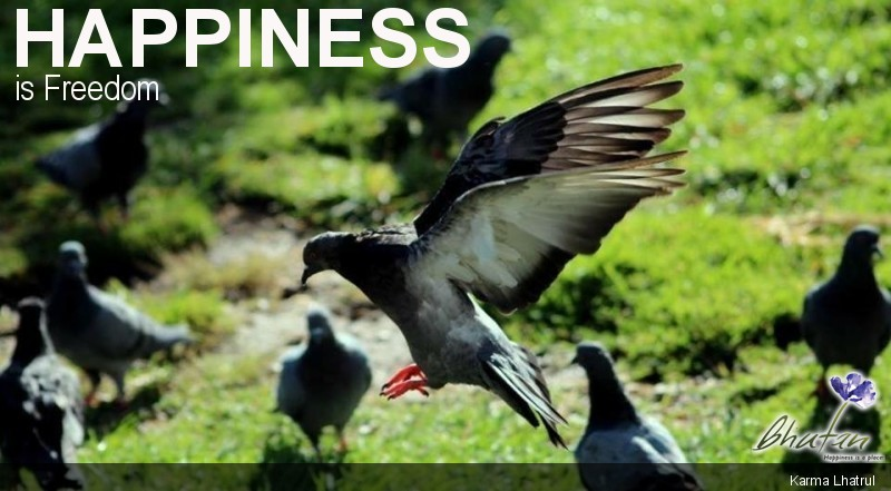 Happiness is Freedom