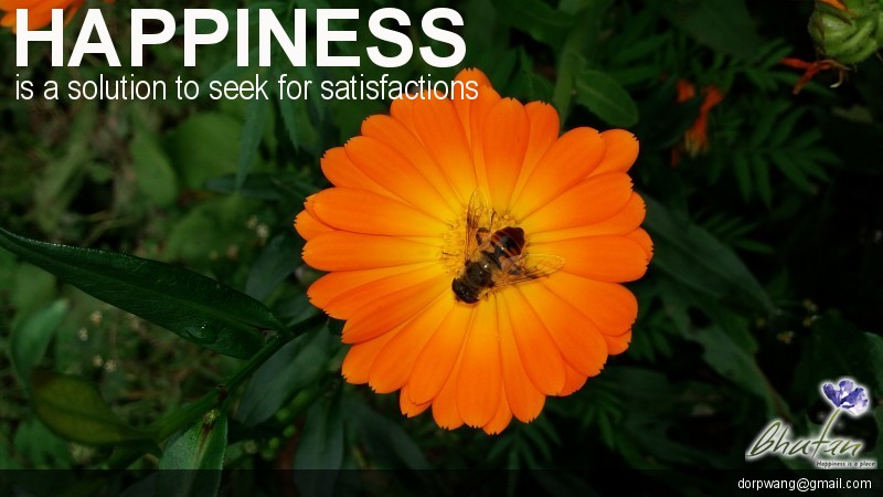 Happiness is a solution to seek for satisfactions