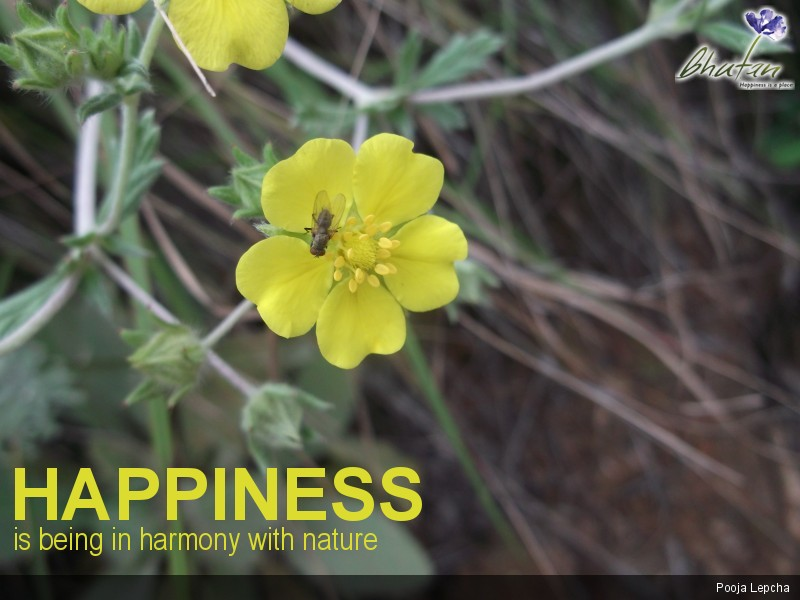 Happiness is being in harmony with nature