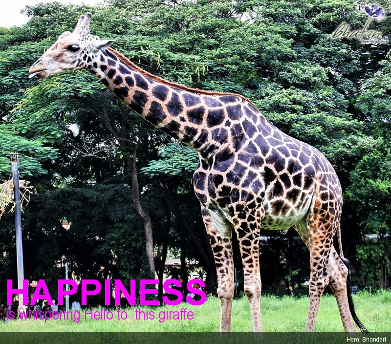 Happiness is whispering Hello to  this giraffe