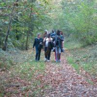 Sur les hauteurs de Profondeville, le bois de la Grande Hulle