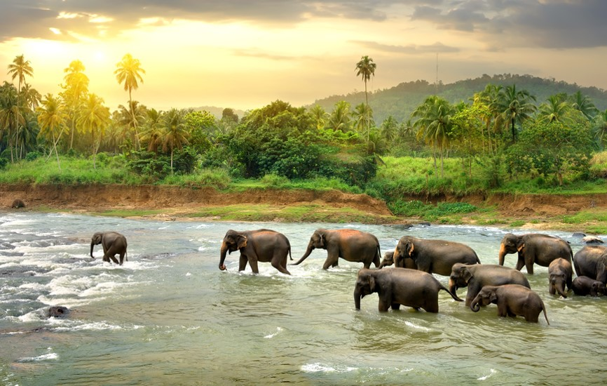 Sri Lanka Holidays - Wildlife